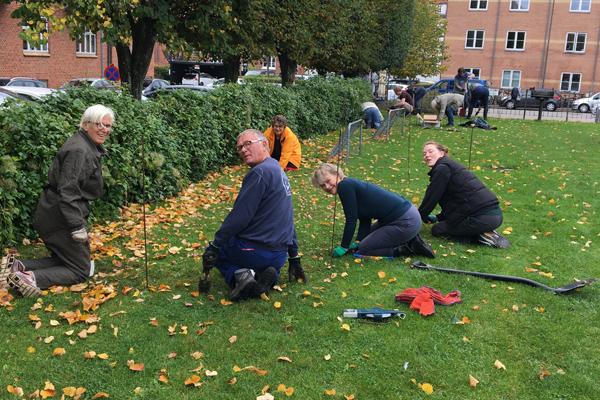 Frivillige lægger blomsterløg på Steen Billes Torv efteråret 2020.