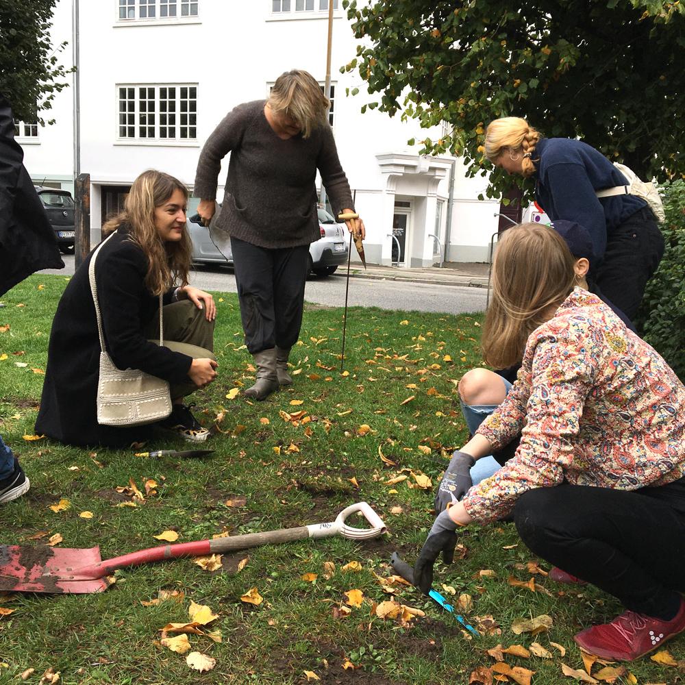 Frivillige lægger blomsterløg på steen Billes Torv på Trøjborg Aarhus